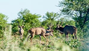 Kudu-2016