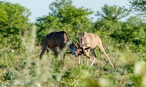 Kudu-2020