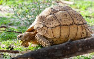 Schildkröte-1713