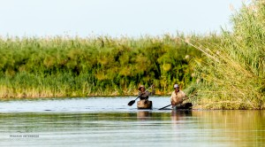 16 20161221am Okavango-DSC 5206