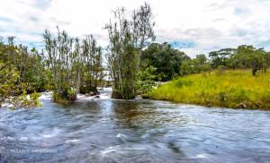 06 20170218-tropischer Fluss-DSC 6244