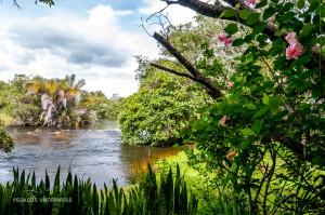 07 20170227-tropischer Fluss-DSC 6422