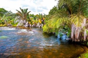 08 20170227-tropischer Fluss-DSC 6416
