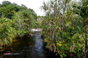 09 20170217-Wasser im tropischen Busch-DSC 6193