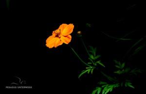 32 20170227-Orange in der Nacht-DSC 6397
