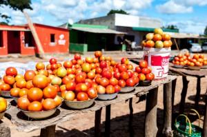 42 20170211-leckere Tomaten-DSC 6019