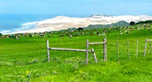 30 20180325-Meer-Viehwiesen am Sandstrand-DSC 9471