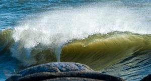 Welle im Wind und Gegenlicht