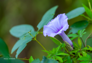 Blume im Parque Nacional Pre-Delta